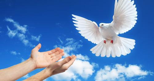 Resultado de imagem para imagens de paz